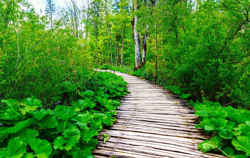 木板走道在公园Plitvice湖 库存图片