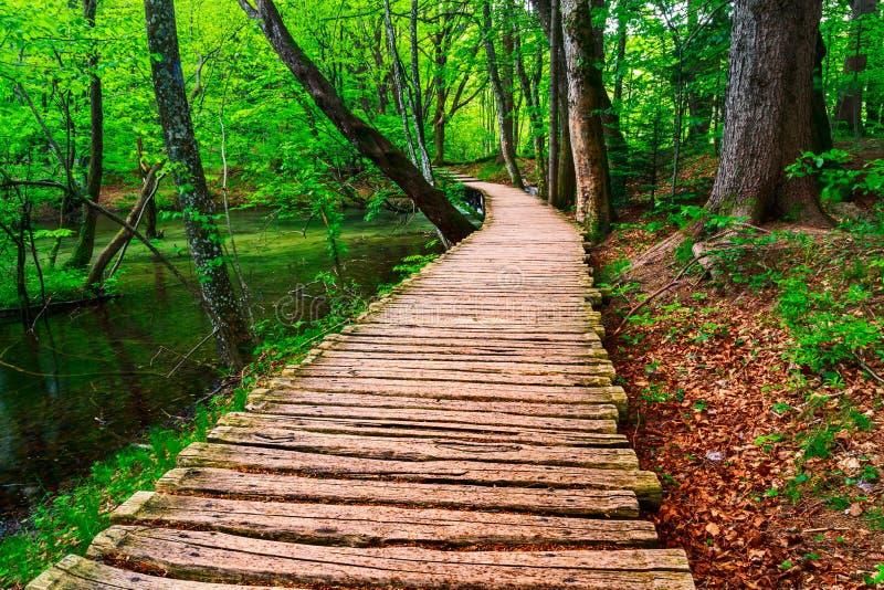 木板走道在公园Plitvice湖 免版税图库摄影