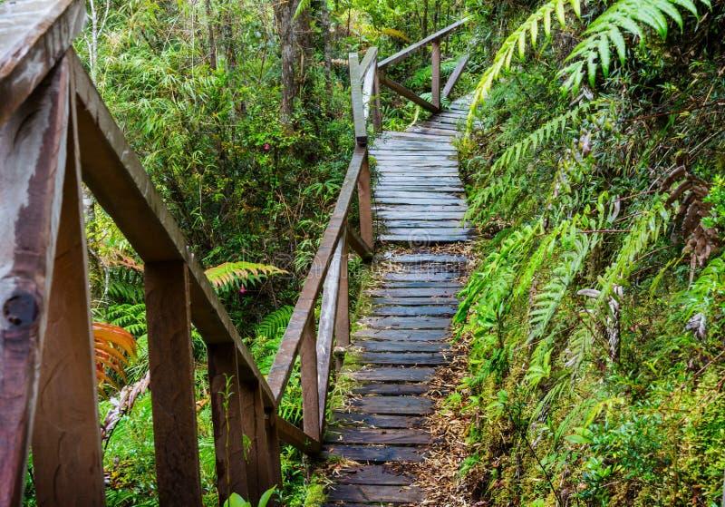 木板走道在森林里 库存照片