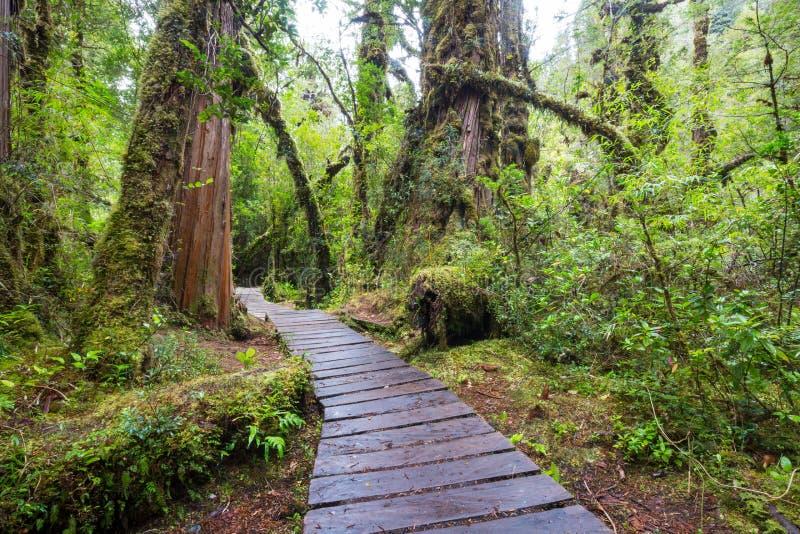 木板走道在森林里 免版税图库摄影