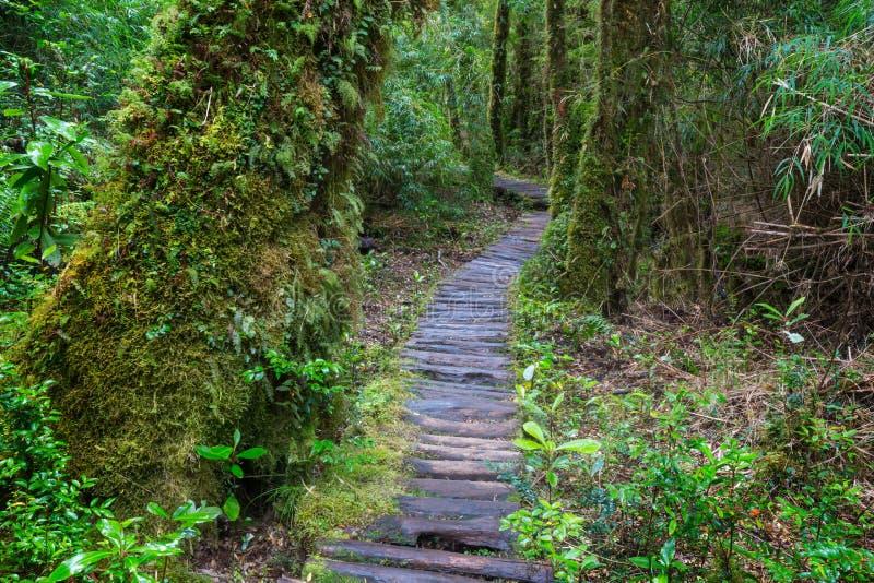 木板走道在森林里 库存图片