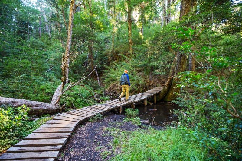 木板走道在森林里 图库摄影
