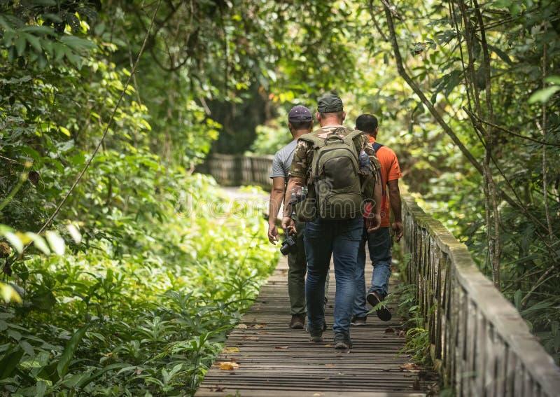 木板走道在沙捞越的马来西亚Niah国家公园,走由游人,后侧方三个人走 免版税库存图片