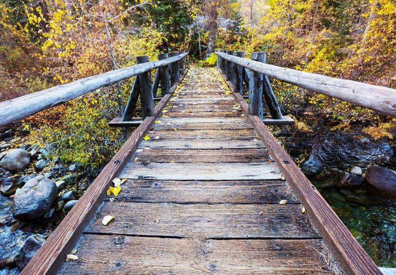 木板走道在秋天森林里 免版税库存图片
