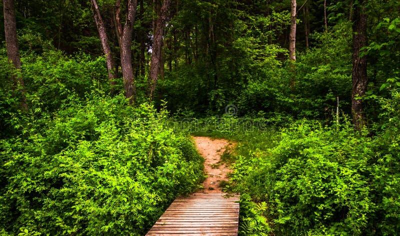木板走道足迹和醉汉春天森林在Codorus国家公园 免版税库存图片
