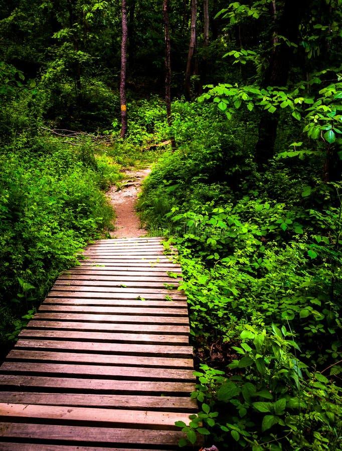 木板走道足迹和醉汉春天森林在Codorus国家公园 图库摄影