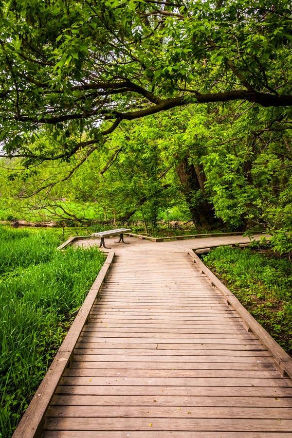 木板走道足迹通过Wildwood公园的森林 图库摄影