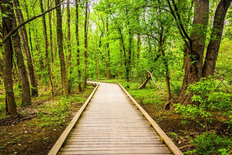 木板走道足迹通过Wildwood公园的森林 库存照片