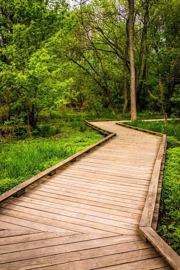 木板走道足迹通过Wildwood公园的森林 免版税库存图片