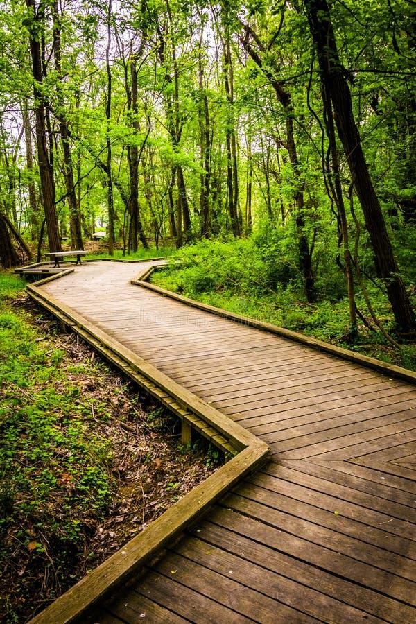 木板走道足迹通过Wildwood公园的森林 免版税库存照片
