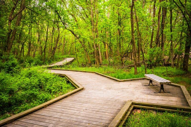木板走道足迹通过Wildwood公园的森林 库存图片