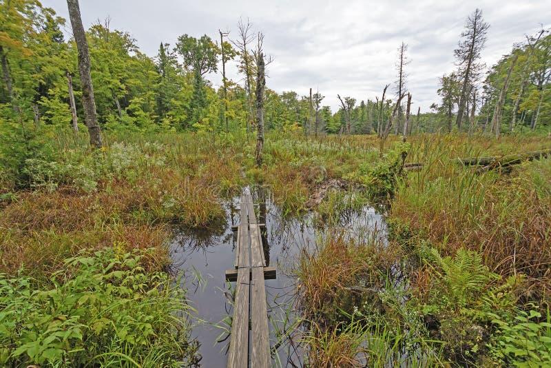 木板走道通过原野沼泽 免版税库存照片