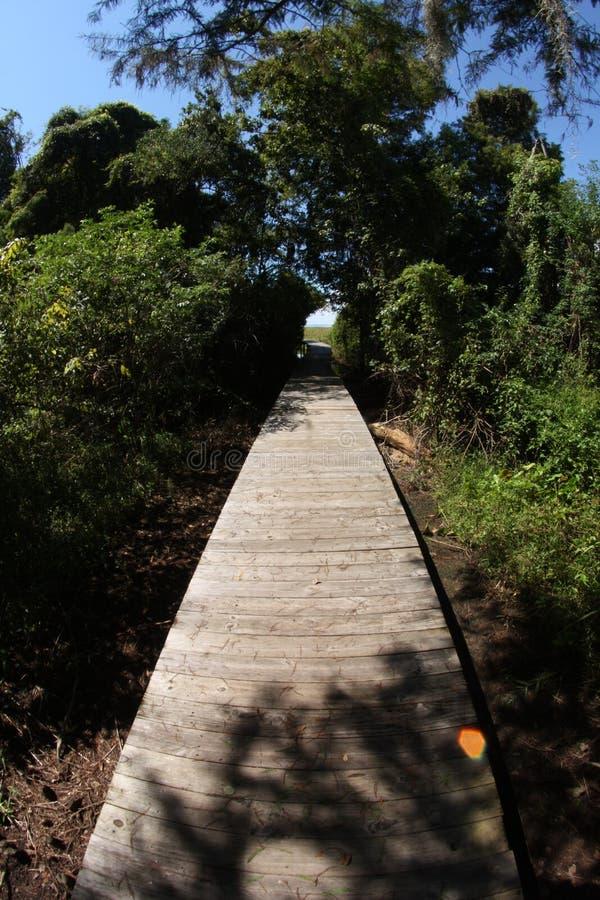 木板走道通过森林和隧道 库存照片