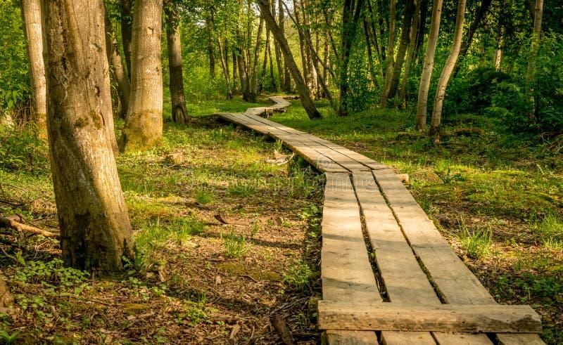 木板走道通过森林 免版税库存图片