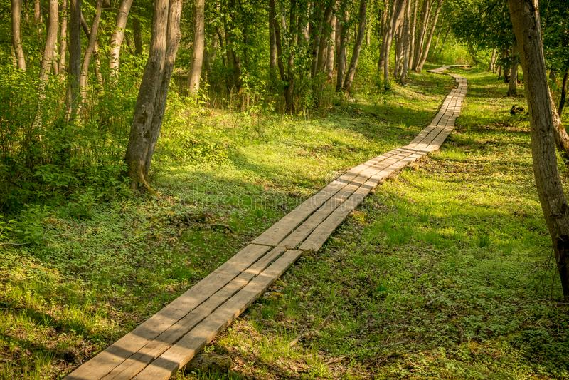木板走道通过森林 免版税库存照片