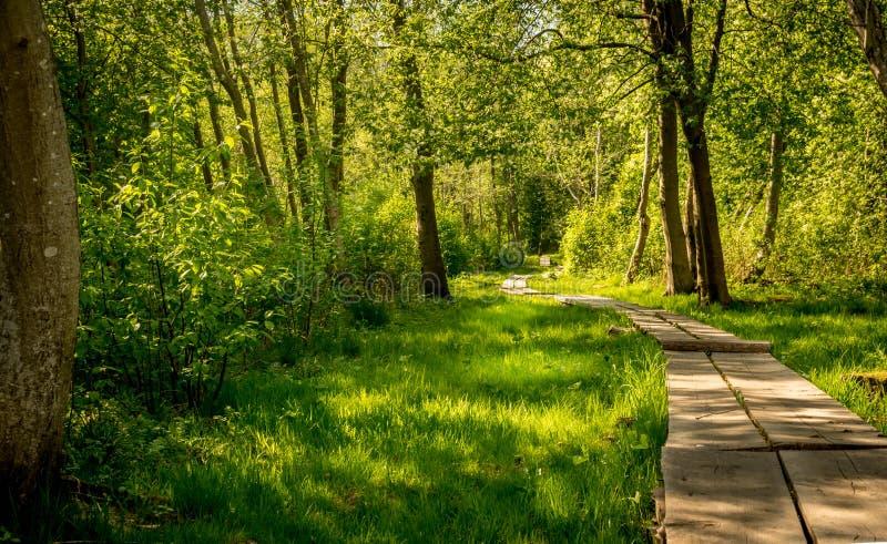 木板走道通过森林 图库摄影