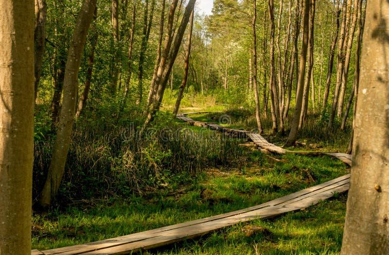 木板走道通过森林 库存照片