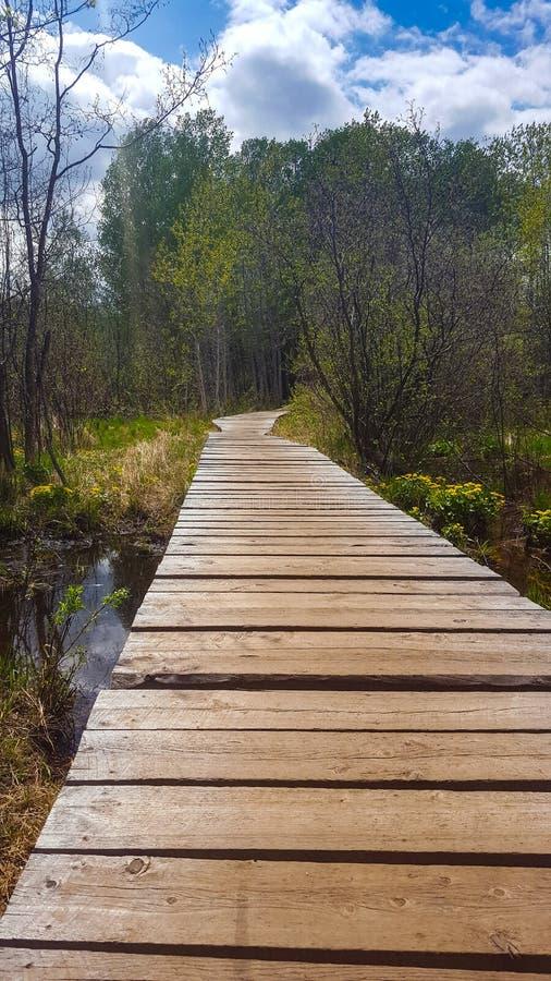 木板走道通过沼泽地自然保护在哈特利公园 免版税库存照片