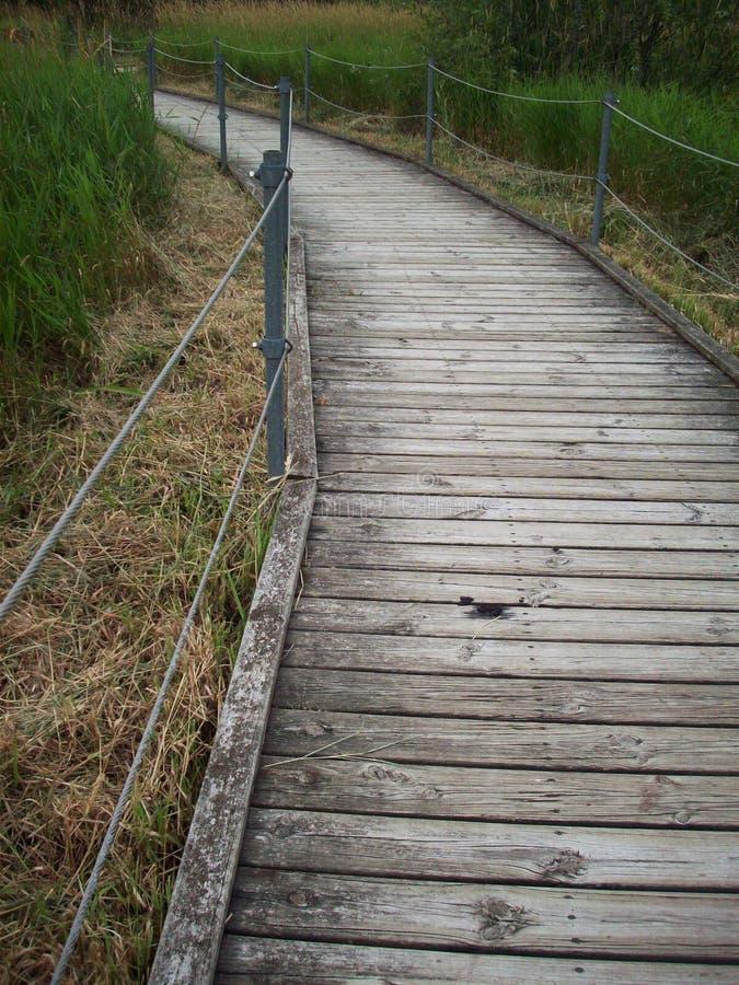 木板走道通过沼泽地 免版税库存图片