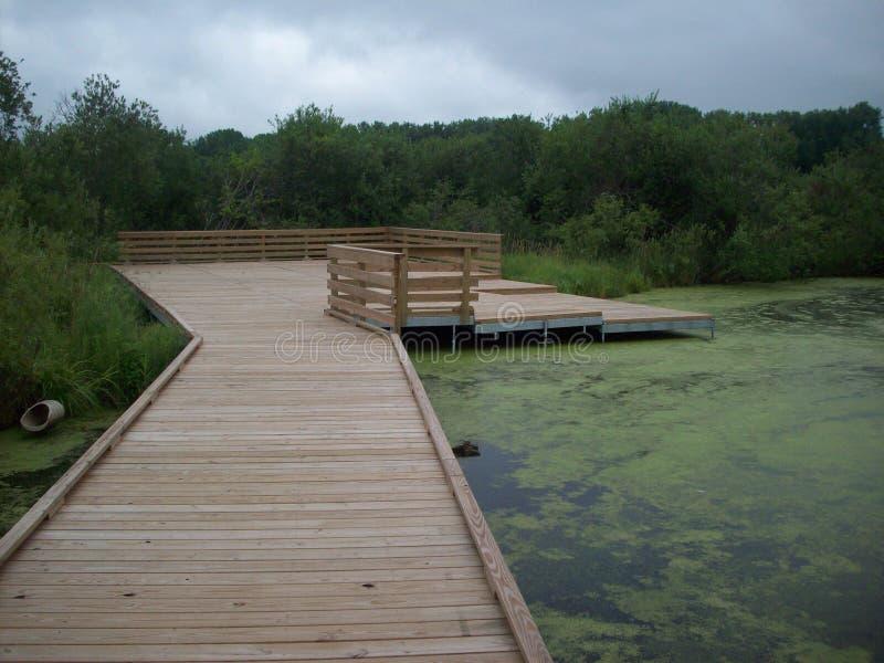 木板走道通过沼泽地 免版税库存照片