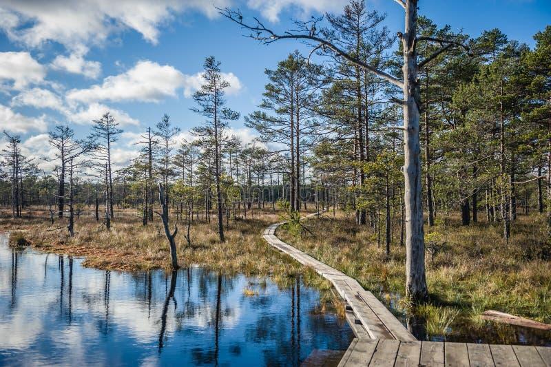 木板走道道路穿过沼泽地区域在早期的春天 库存图片