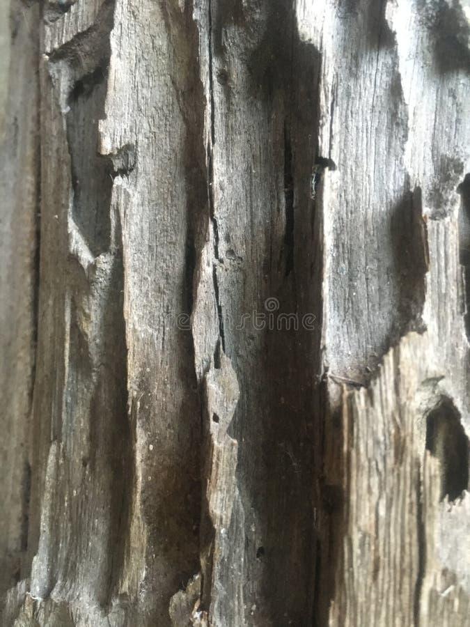 木柱子背景 库存照片