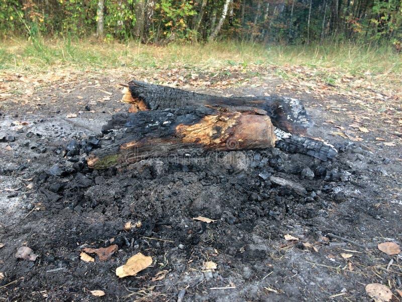 木柴、煤炭和灰在火以后在森林无限的火 库存图片