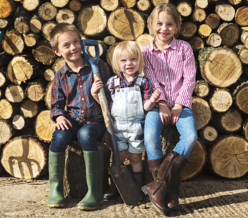 木柴薪材木材木材木材日志概念 免版税图库摄影