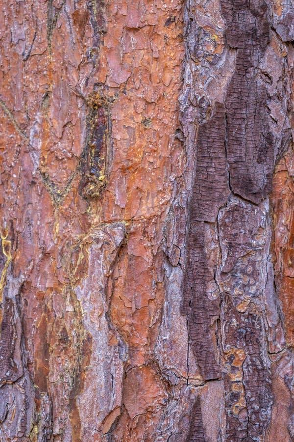 木树五颜六色的皮肤 免版税库存照片