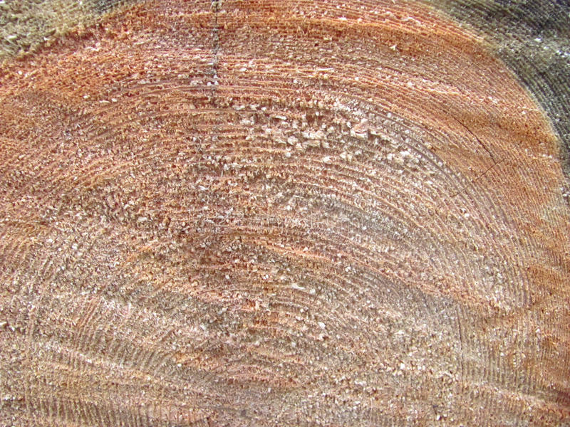 木树桩纹理照片 免版税图库摄影