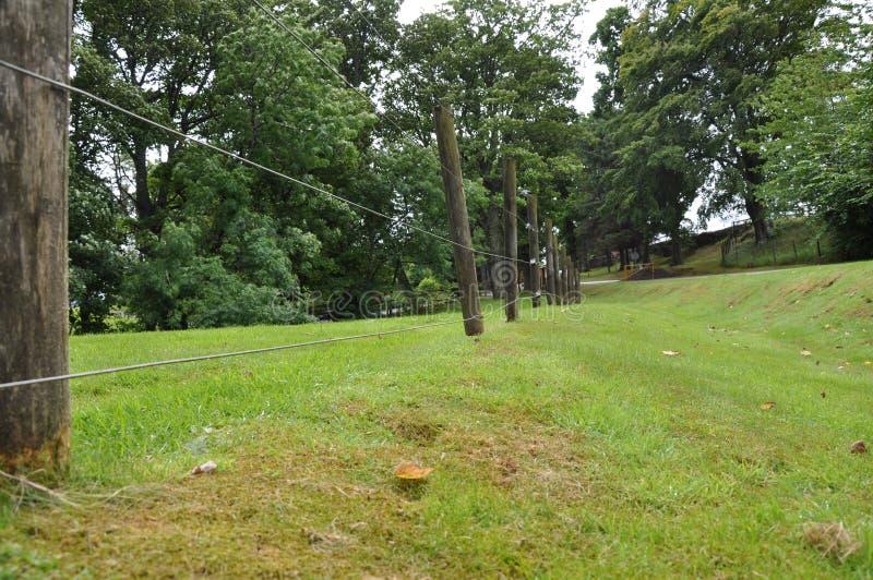 木树篱由兔子啃了 库存照片