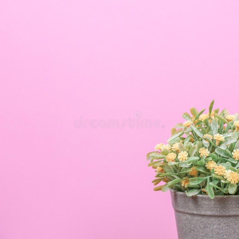木桌上的假树和粉红色背景 库存图片