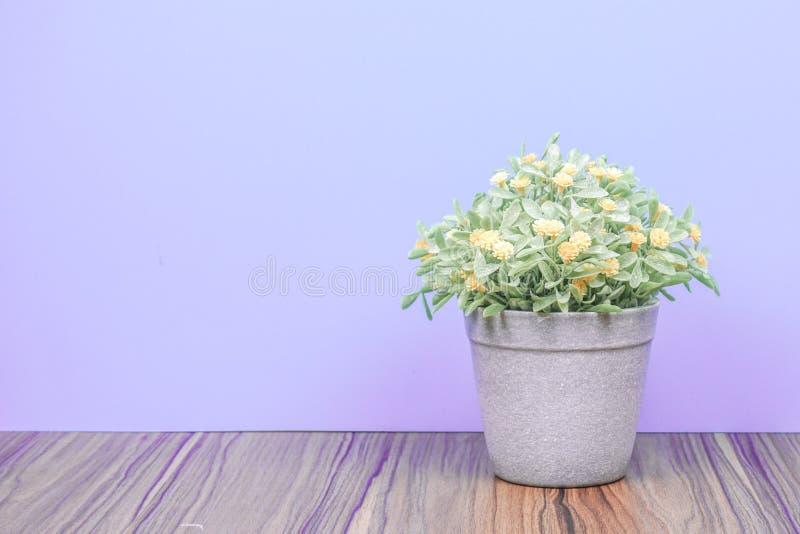 木桌上的假树和紫色的柔和背景 免版税图库摄影