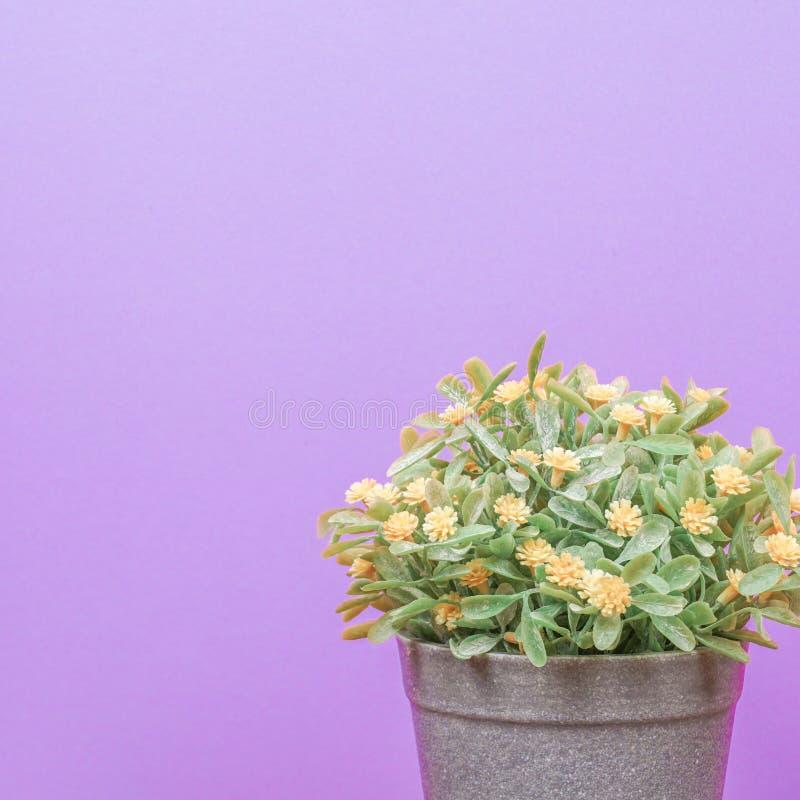 木桌上的假树和紫色的柔和背景 免版税库存图片