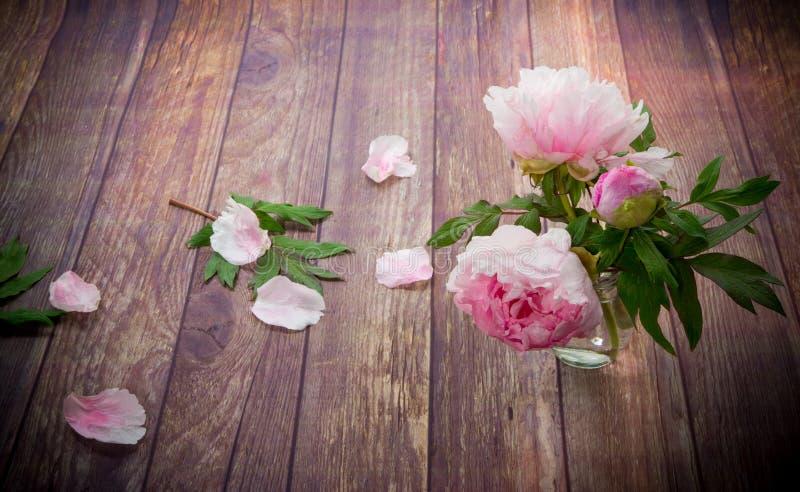 木桌上花瓣绽放的漂亮牡丹 免版税库存照片