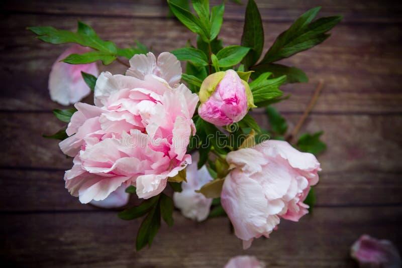 木桌上花瓣绽放的漂亮牡丹 库存图片