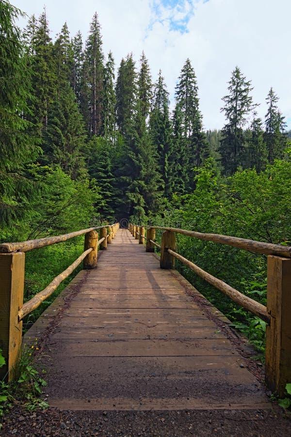 木桥在夏天森林它是路线的零件在Synevyr湖附近 库存照片