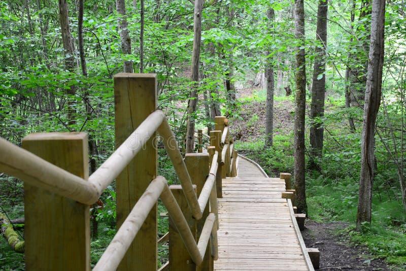 木桥在森林锡古尔达里 库存图片