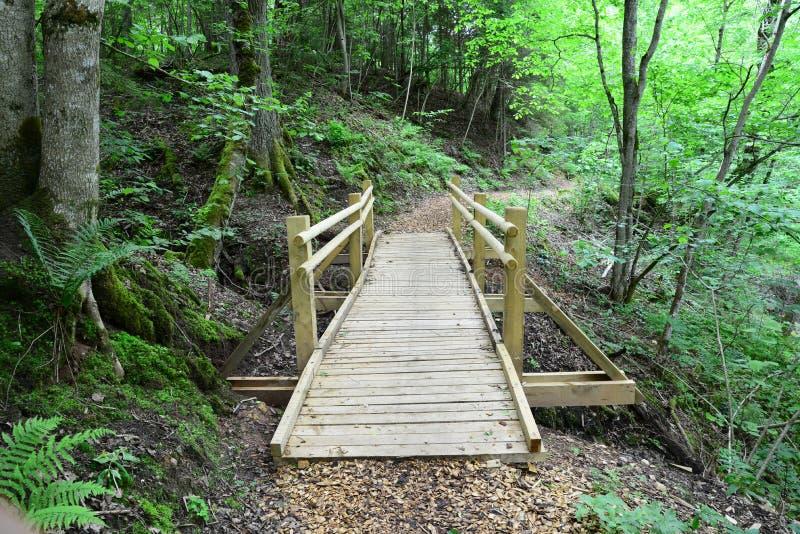 木桥在森林锡古尔达里 图库摄影