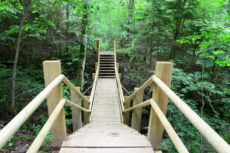 木桥在森林锡古尔达里 免版税库存照片