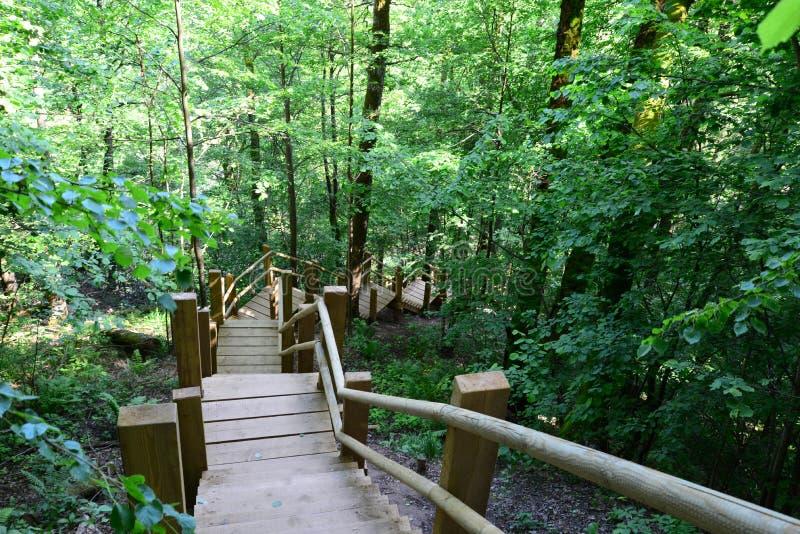 木桥在森林锡古尔达里 免版税库存图片