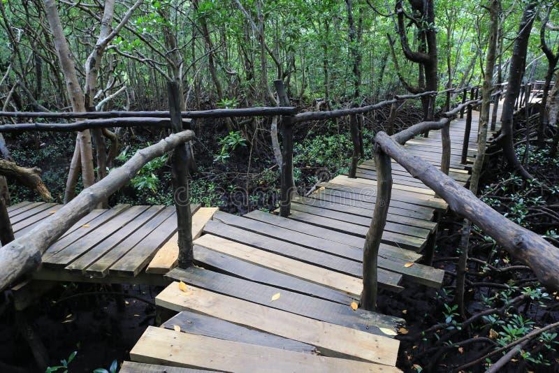 木桥在美洲红树森林里 库存照片