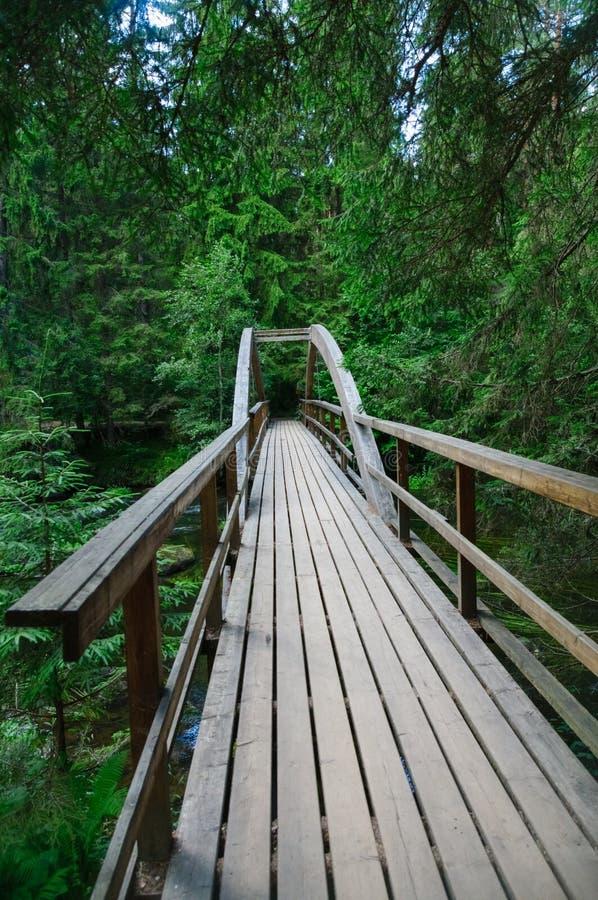 木桥在Ahja河的密集的森林里 免版税图库摄影