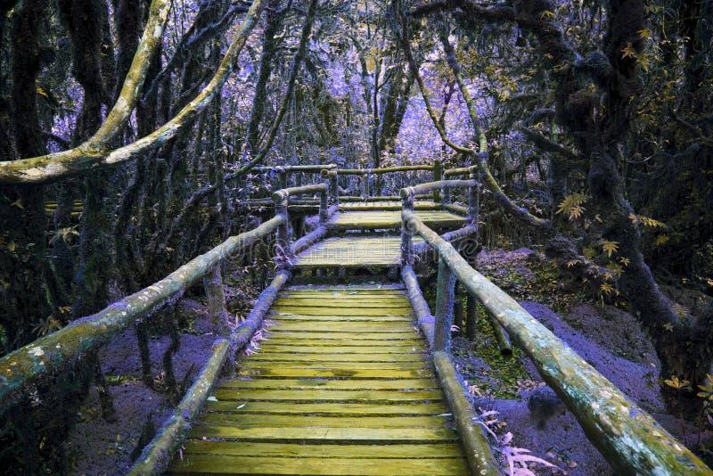 木桥梁的抽象颜色在小山有湿气植物的雨林里 免版税图库摄影