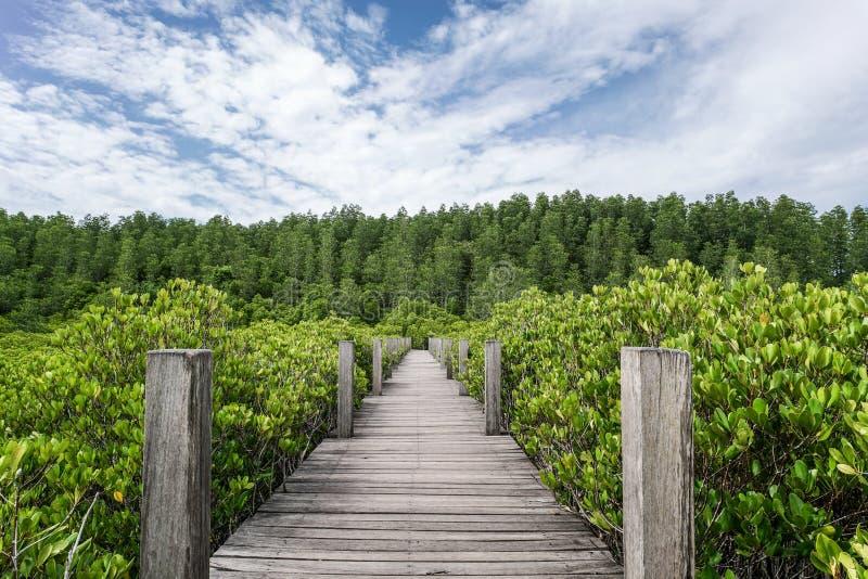 木桥梁美洲红树森林走道 库存图片
