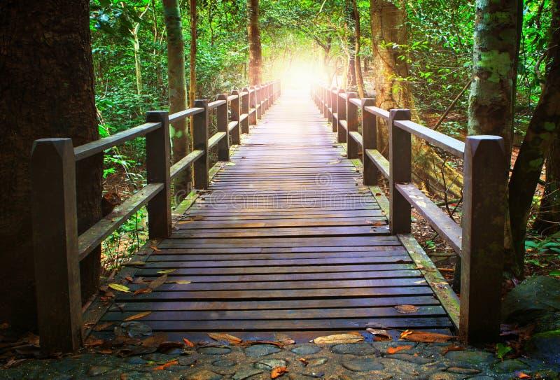 木桥梁透视在深森林横穿水小河的 库存图片