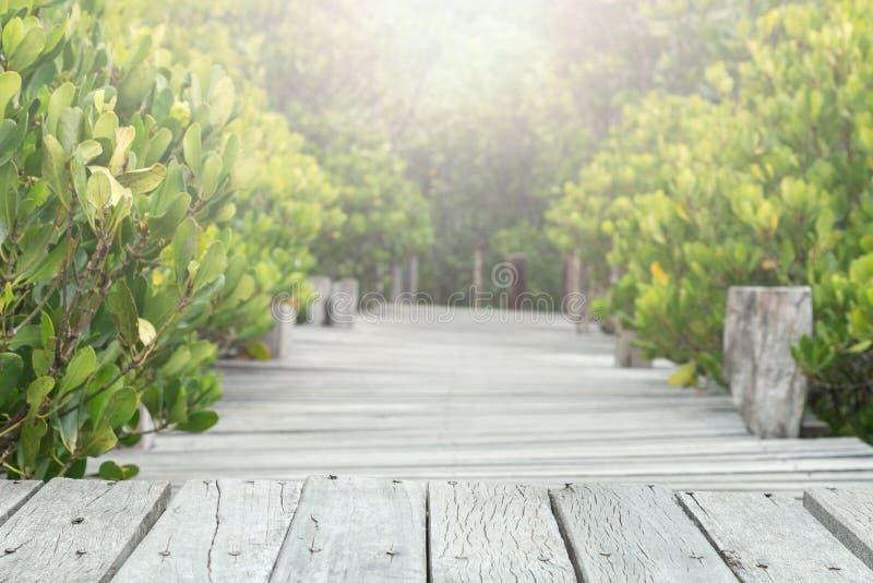 木桥走道在美洲红树森林,选择聚焦里 免版税库存图片
