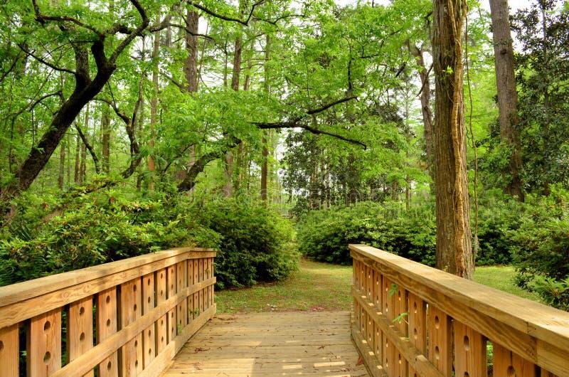 木桥路到森林里 免版税库存图片