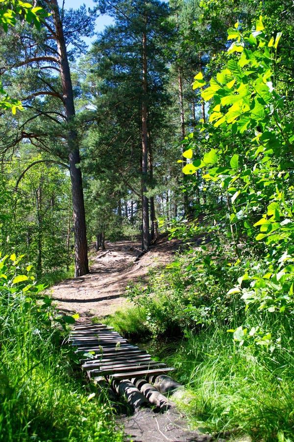 木桥通过森林河 库存照片