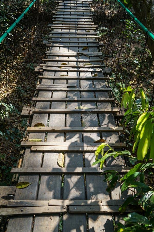 木桥道路穿过有绳索路轨、树叶子和植物阴影的树密林 库存图片